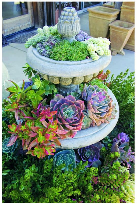 Garden Ideas For Small Front Yards 17 small front yard landscaping ideas to define your curb appeal colorful succulents curb appeal workwithnaturefo
