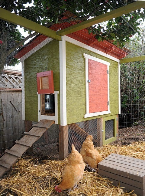 SIMPLE URBAN CHICKEN COOP