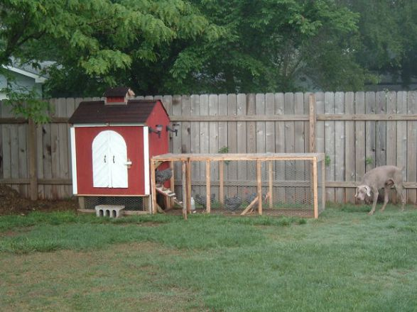 LITTLE BACKYARD CHICKEN COOP