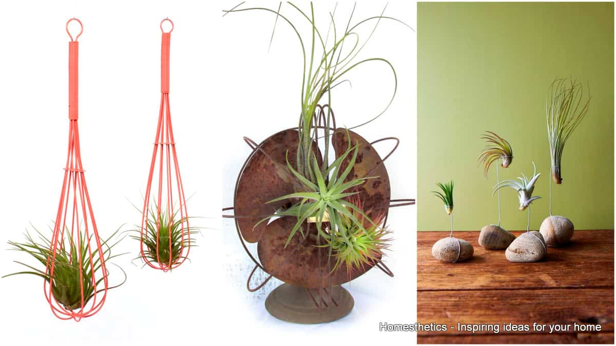 23 exceptionally beautiful air plant holder ideas to collect for Air plant holder ideas