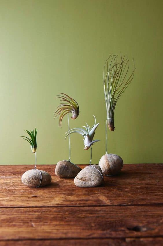 23 Exceptionally Beautiful Air Plant Holder Ideas To Collect