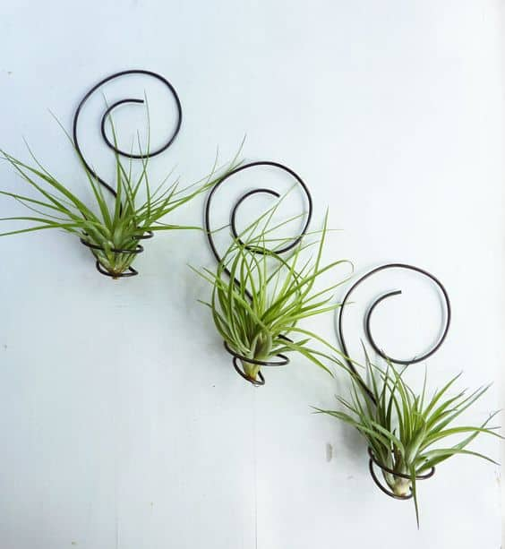 WIRE AIR PLANT WALL HOLDER