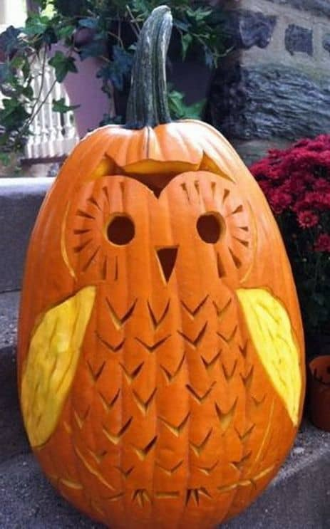 1. DIY COOL OWL PUMPKIN CARVING