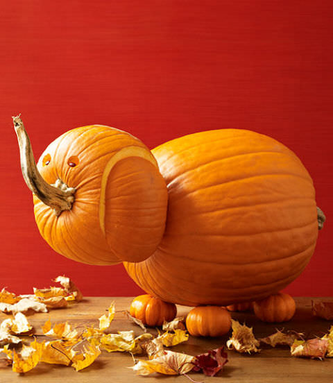 64. CREATE AN ELEPHANT PUMPKIN