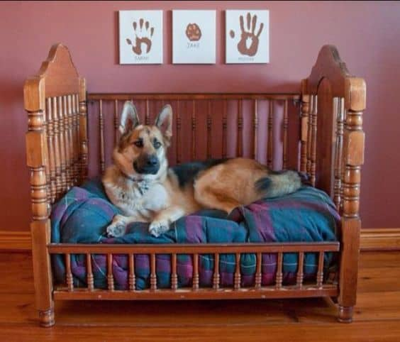 22. CRIB DOG BED TRANSFORMATION