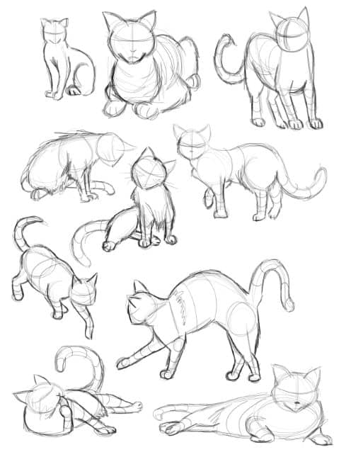 CAT PROPORTIONS AND MOVEMENT