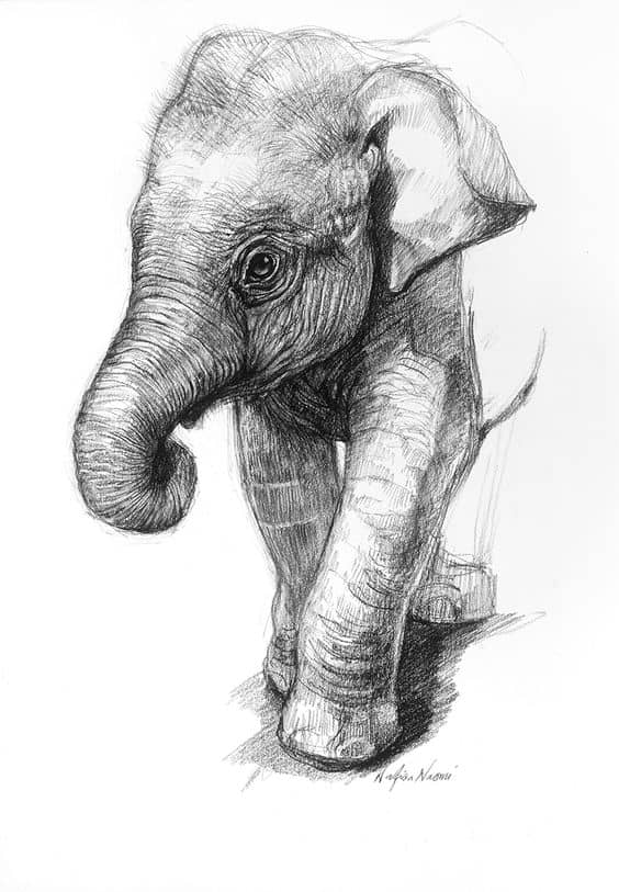 REALISTIC ELEPHANT PENCIL DRAWING