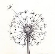 SIMPLE DANDELION ILLUSTRATION