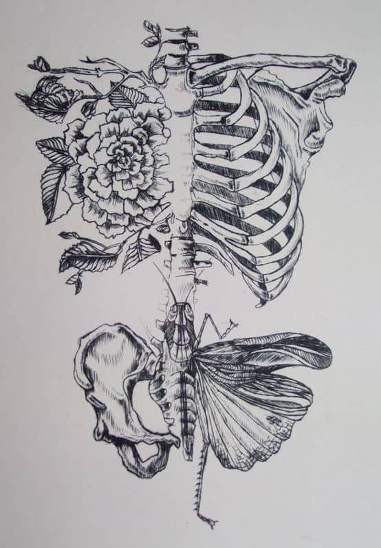 THE REBIRTH OF A RIB-CAGE INTO NATURE