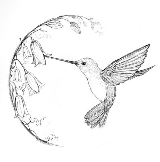 DELICATE HUMMING-BIRD DRAWING