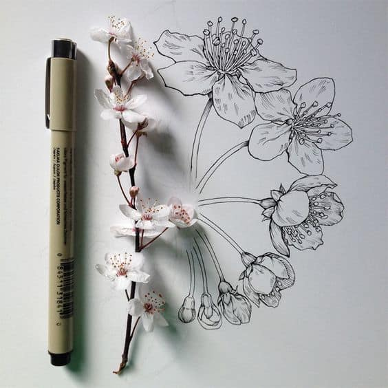 CHERRY BLOSSOM drawing