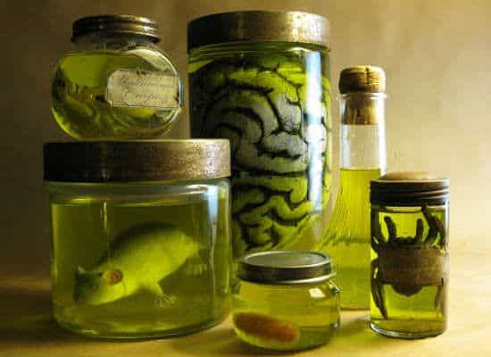 28. CREEPY SPECIMENS IN JARS