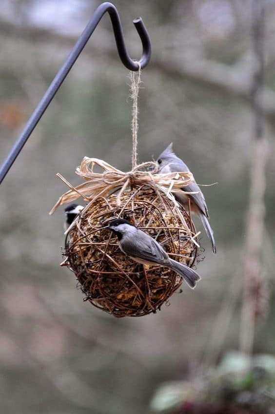GRAPEVINE SUET BALL FEEDER