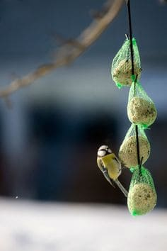 SIMPLE SUET FEEDERS