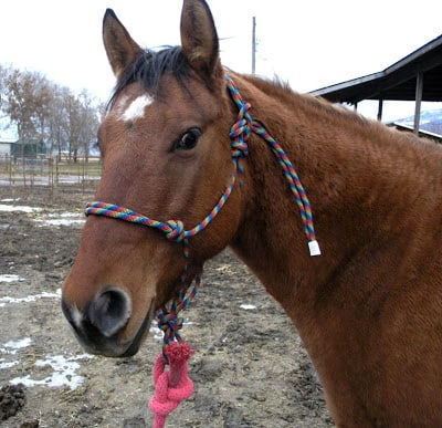 MAKE A HORSE HALTER OUT OF PARACORD
