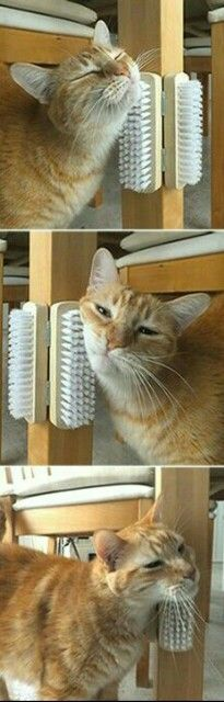 3. Simple And Effective Cat Brush Scratching INSTALLMENT