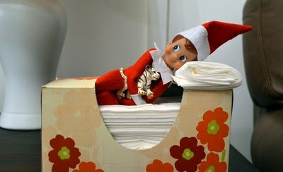 109. Elfie sleeps in a Box of Tissues