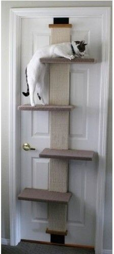 12. EPIC DIY SMART CAT DOOR CLIMBER