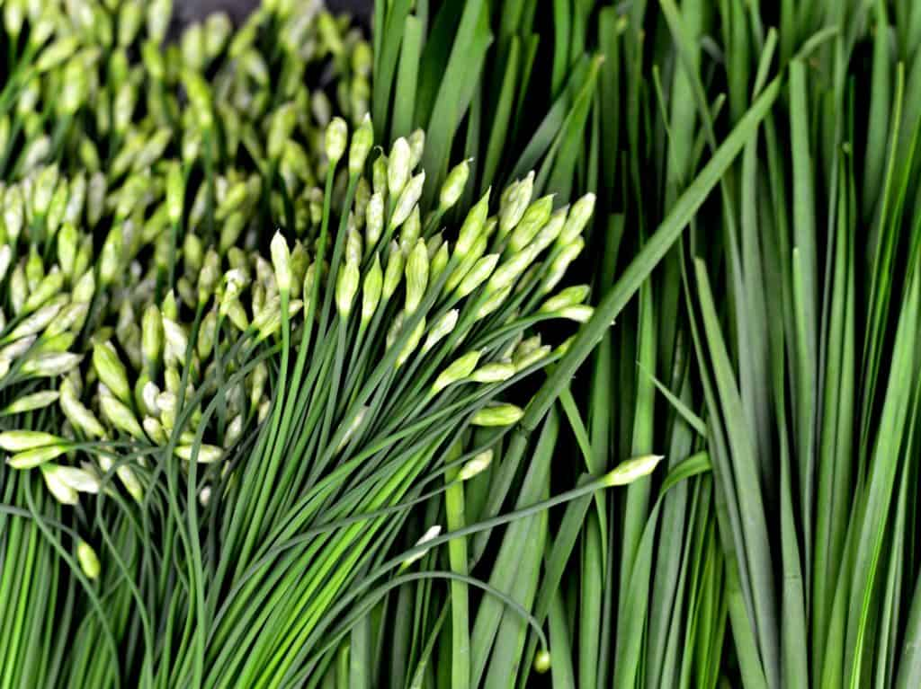 9 Chives