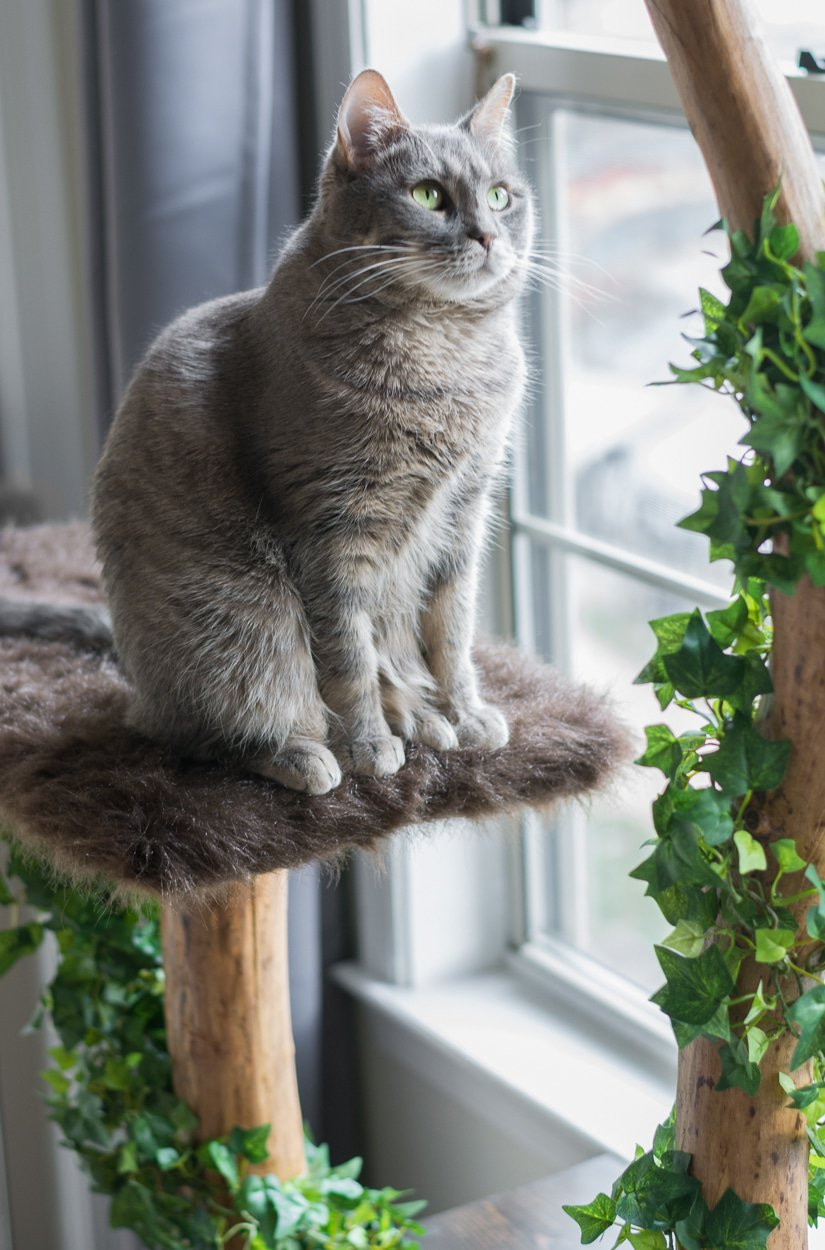 19 Adorable Free Cat Tree Plans For Your Furry Friend Homesthetics