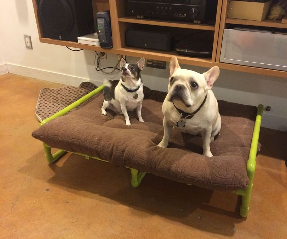 Different Dog Beds