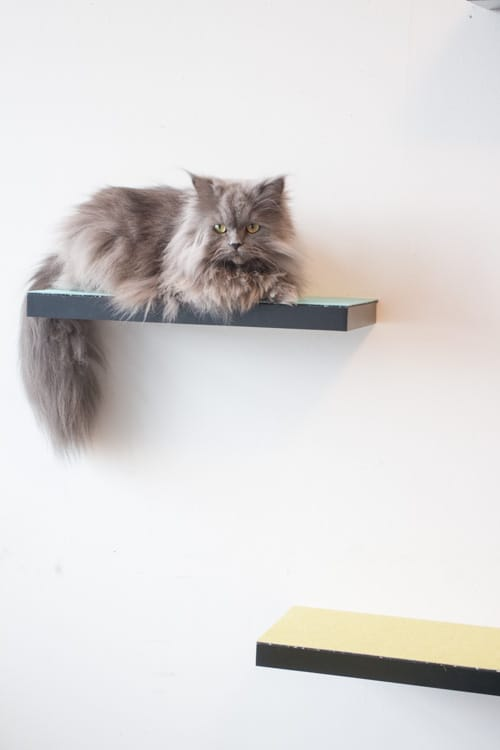 CAT SHELVES ARE AN ALMOST-CAT TREE