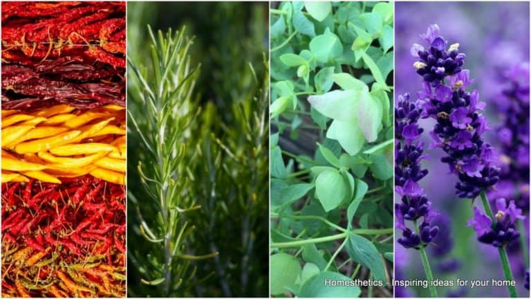 Indoor Herb Garden 101Ideas With 19 Plants and How to Care for Them