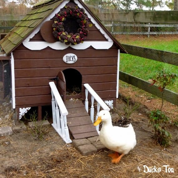 THE COTTAGE DUCK HOUSE