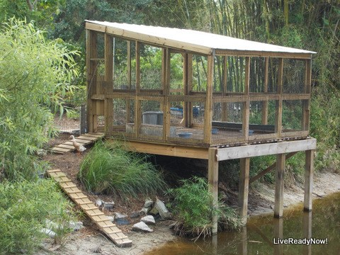 THE LAKE HOUSE FOR DUCKS