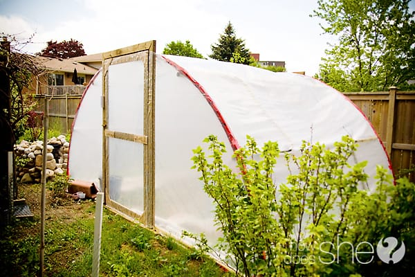LEARN HOW TO MAKE A DIY GREENHOUSE USING A TRAMPOLINE
