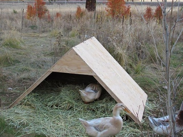 43 free diy duck coop plans duck houses plans for for Duck slide plans