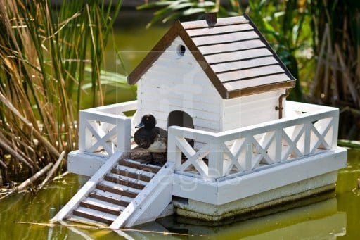 THE FLOATING COTTAGE DUCK HOUSE