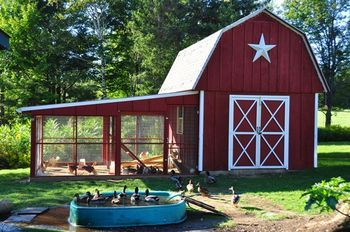 THE BARN COOP AND RUN