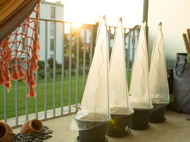 EASY AND INEXPENSIVE DIY GREENHOUSE PROJECT FOR YOUR TOMATO PLANTS