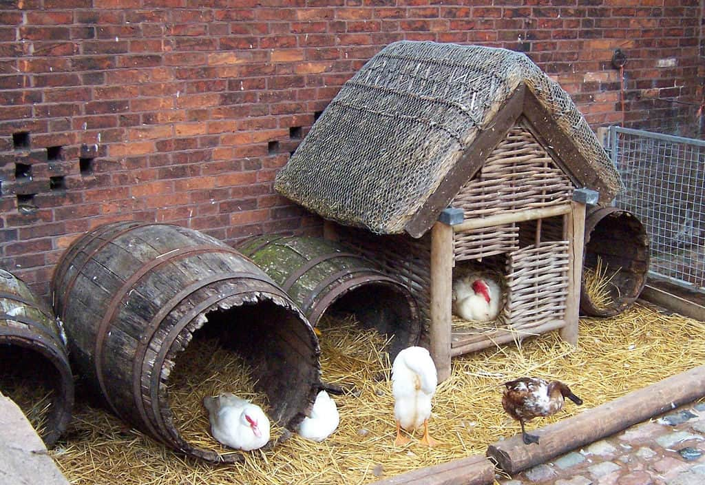 THE STRAW AND BARREL COOPS