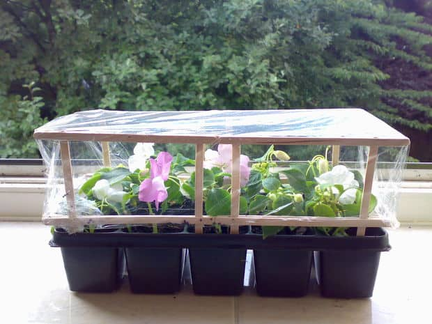 INCREDIBLY EASY DIY GREENHOUSE MADE FROM COFFEE STIRRERS
