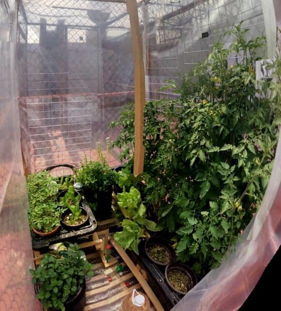 BUILD A GREENHOUSE ON YOUR ROOFTOP