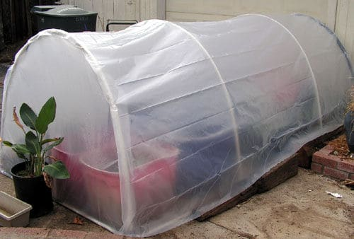 CREATE A MEDIUM-SIZED GREENHOUSE FOR LESS THAN $ 25