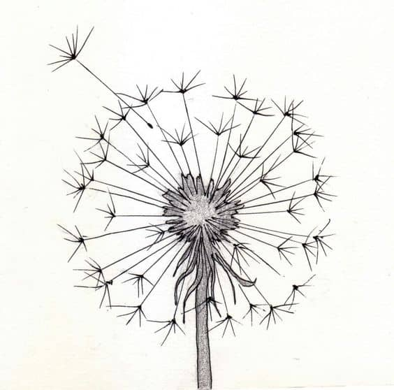 13. WISHES IN A DANDELION