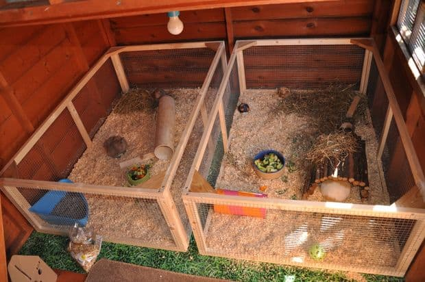 GUINEA PIG OR RABBIT SHED