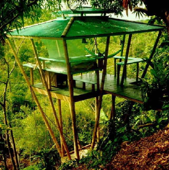 THE CLIFF-SIDE TREE HOUSE