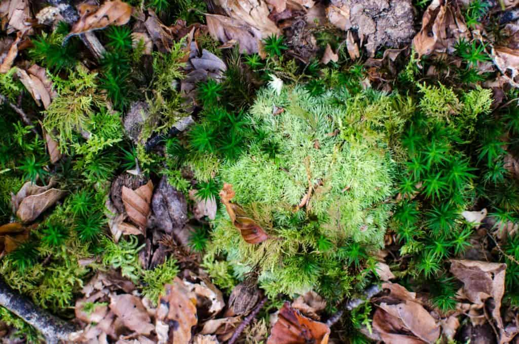 Learn How to Craft Your Own Moss Shower Mat at Home