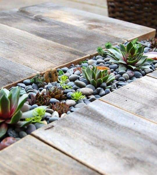 66. Rocks and Succulent Edging