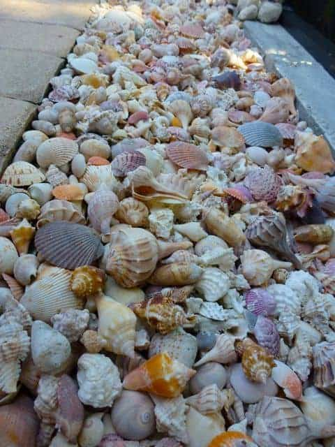 72. Sea Shell Garden Edging