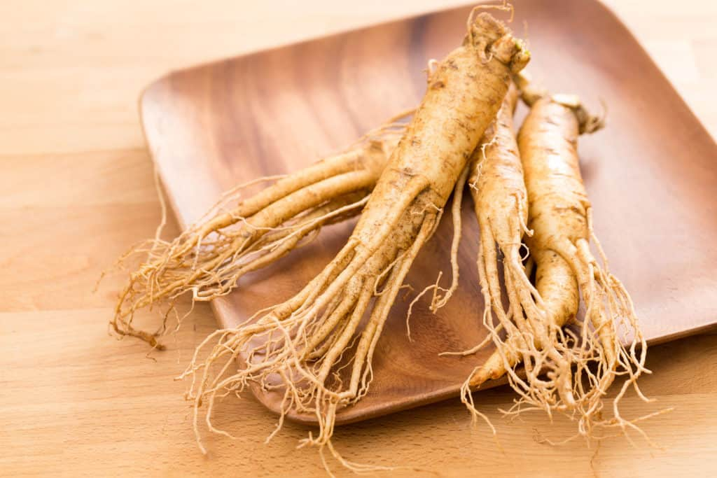 21.Ginseng 53 OF THE BEST GREENHOUSE PLANTS FOR HAPPY GARDENERS AND GARDENS