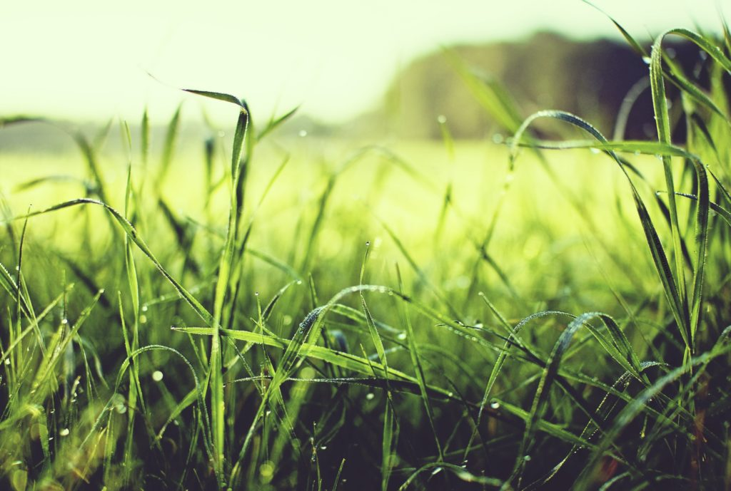 Short Intro Into The Basics of Lawn Care for an Epic Curb Appeal 4