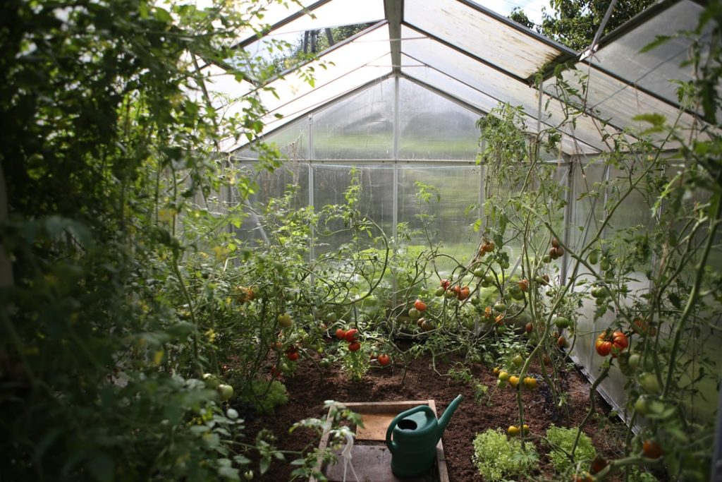 Best Greenhouse clear Plastic