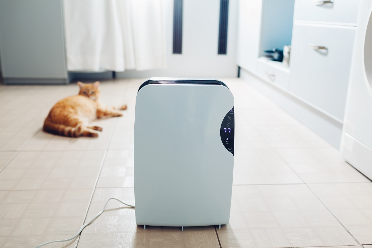 Best Dehumidifiers for Mold 1