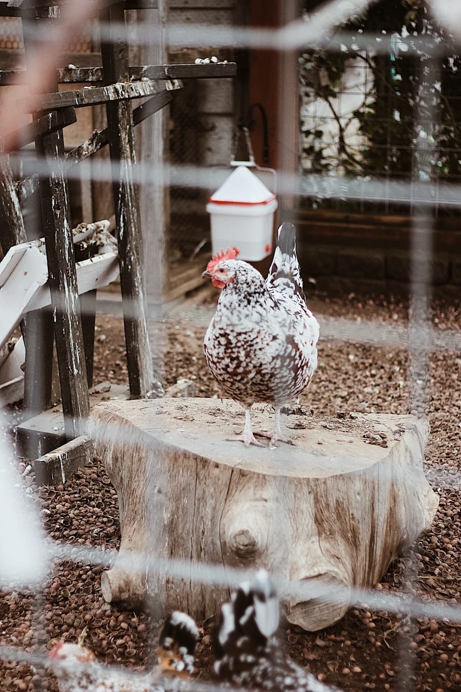 Best Electric Fence for Chickens 3