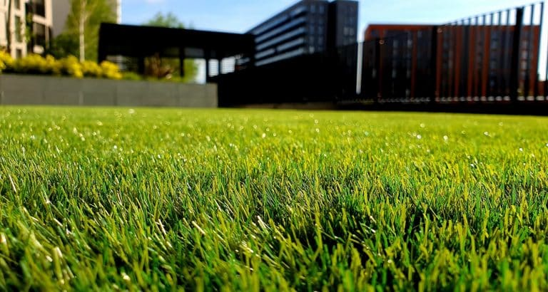 13 Best Grass Seeds to Plant in 2020 01